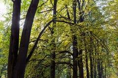 Ακτίνες ήλιων πρωινού στο δάσος φθινοπώρου Στοκ φωτογραφία με δικαίωμα ελεύθερης χρήσης
