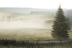 Ακτίνες ήλιων πρωινού στο δέντρο βουνών ομίχλης Στοκ εικόνα με δικαίωμα ελεύθερης χρήσης