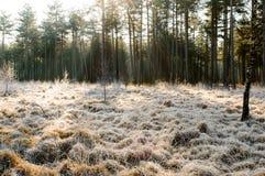 Ακτίνες ήλιων στην παγωμένη χλόη Στοκ φωτογραφία με δικαίωμα ελεύθερης χρήσης