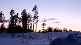 Ακτίνες ήλιων στο ηλιοβασίλεμα στο δασικό φως του ήλιου μέσω των δέντρων φιλμ μικρού μήκους