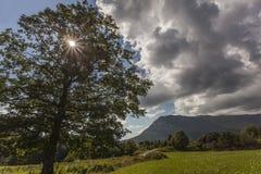 Ακτίνες ήλιων s που λάμπουν μέσω του δέντρου Στοκ φωτογραφία με δικαίωμα ελεύθερης χρήσης