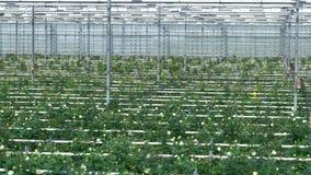 Ακτίνες, γραμμές ποτίσματος και σειρές λουλουδιών που πηγαίνουν επάνω στον τοίχο θερμοκηπίων 4K απόθεμα βίντεο