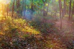Ακτίνες Θεών - κωνοφόρο δάσος νωρίς το πρωί Στοκ φωτογραφία με δικαίωμα ελεύθερης χρήσης