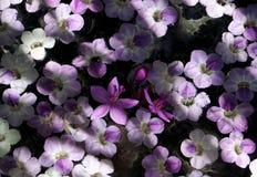 Ακτίνες και σκιές ήλιων πέρα από τη ρύθμιση λουλουδιών που επιπλέουν στο νερό Στοκ εικόνα με δικαίωμα ελεύθερης χρήσης