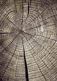 Ακτίνες σε ένα ξύλινο κολόβωμα Στοκ Φωτογραφία