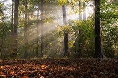 Ακτίνες στο δάσος Στοκ εικόνα με δικαίωμα ελεύθερης χρήσης