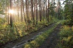 Ακτίνες στο ξύλο Στοκ φωτογραφία με δικαίωμα ελεύθερης χρήσης
