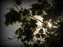 Ακτίνες της The Sun στο δάσος Στοκ Εικόνες