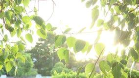 Ακτίνες του ήλιου μέσω των φύλλων των δέντρων απόθεμα βίντεο