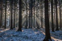 Ακτίνες του ήλιου Στοκ φωτογραφία με δικαίωμα ελεύθερης χρήσης