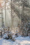 Ακτίνες του ήλιου Στοκ Φωτογραφία