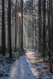 Ακτίνες του ήλιου Στοκ εικόνα με δικαίωμα ελεύθερης χρήσης