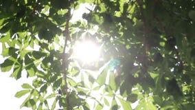 Ακτίνες του θερινού ήλιου που λάμπει μέσω του πράσινου φυλλώματος των δέντρων απόθεμα βίντεο