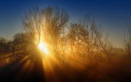 Ακτίνες του μαλακού φωτός Στοκ Εικόνα