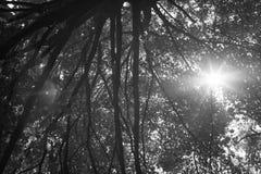 Ακτίνες του φιλτραρίσματος ηλιοφάνειας μέσω του φυλλώματος Στοκ Φωτογραφία