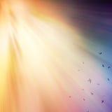 Ακτίνες του φωτός. Στοκ Φωτογραφία