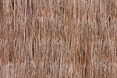 Ακτίνες των ξηρών κλάδων στοκ εικόνα