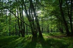 Ακτίνες φωτός του ήλιου πρωινού στο δάσος Στοκ εικόνες με δικαίωμα ελεύθερης χρήσης