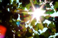Ακτίνες φωτός του ήλιου Στοκ φωτογραφία με δικαίωμα ελεύθερης χρήσης