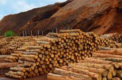 ακτίνων διακινούμενο truck οδικών ρυμουλκών ρύπου δασικό φορτωμένο βιομηχανία ξύλινο Στοκ Εικόνα