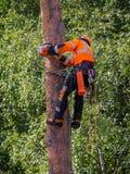 ακτίνων διακινούμενο truck οδικών ρυμουλκών ρύπου δασικό φορτωμένο βιομηχανία ξύλινο Στοκ φωτογραφίες με δικαίωμα ελεύθερης χρήσης