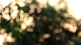 Ακτινοβολία από τον ήλιο που λάμπει μέσω των δέντρων απόθεμα βίντεο