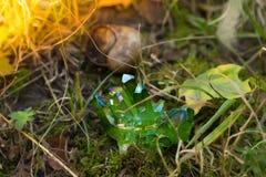 Ακτινοβολώντας πράσινα μαγικά κρύσταλλα στο δάσος στοκ εικόνες