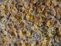 Ακτινωτά σύνολα του κίτρινου μεταλλεύματος φωσφορικού άλατος cacoxenite στοκ εικόνα με δικαίωμα ελεύθερης χρήσης