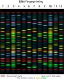δακτυλοσκοπία DNA Στοκ φωτογραφία με δικαίωμα ελεύθερης χρήσης