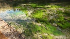 Ακόμα βλασταημένος του καθαρού νερού με τις υποβρύχιες εγκαταστάσεις απόθεμα βίντεο