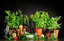Ακόμα ζωής συστατικά, χορτάρια και εργαλεία πνεύματος μαγειρεύοντας στοκ εικόνες