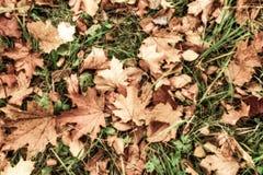 Ακόμα ζωή από μια χλόη και τα φύλλα Στοκ Εικόνες