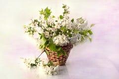 Ακόμα ζωή με τα λουλούδια άνοιξη σε ένα καλάθι Στοκ Εικόνες