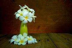 Ακόμα ζωή με τα λουλούδια plumaria Στοκ φωτογραφίες με δικαίωμα ελεύθερης χρήσης