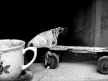 Ακόμα ζωή με τα σαλάχια κυλίνδρων και το φλυτζάνι τσαγιού στοκ εικόνες