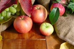 Ακόμα ζωή με τα φρούτα φθινοπώρου στο αγροτικό ξύλινο υπόβαθρο Στοκ Φωτογραφία