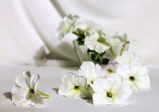 Ακόμα ζωή με την άσπρη πετούνια λουλούδια ενός στα άσπρα υφάσματος στο μόριο Στοκ εικόνα με δικαίωμα ελεύθερης χρήσης