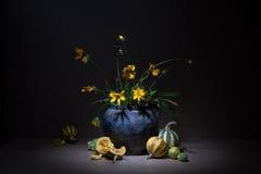 Ακόμα ζωή με τις κολοκύθες σε ένα μαύρο υπόβαθρο: λουλούδια στους μακροχρόνιους πράσινους μίσχους στην παλαιά κανάτα αργίλου και  Στοκ Εικόνες