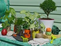 Ακόμα ζωή με τις πράσινες εγκαταστάσεις, τις τσουγκράνες, τα γάντια και τα αχλάδια Στοκ Εικόνα