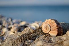 Ακόμα ζωή με το θαλασσινό κοχύλι και δίχτυ του ψαρέματος στην τροπική παραλία Στοκ Φωτογραφία