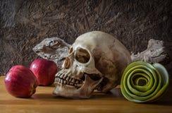 Ακόμα ζωή με το κρανίο και τα πράσινα μήλα Στοκ εικόνες με δικαίωμα ελεύθερης χρήσης