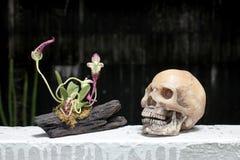 Ακόμα ζωή με το κρανίο και τη ορχιδέα στο ξύλο στη νύχτα με το υπόβαθρο dak Στοκ εικόνες με δικαίωμα ελεύθερης χρήσης