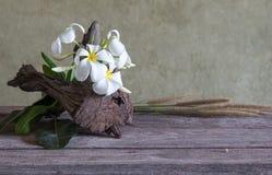 Ακόμα ζωή με το λουλούδι Frangipani (Plumeria) Στοκ Φωτογραφία