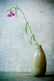 Ακόμα ζωή με το ρόδινο λουλούδι κόσμου Στοκ φωτογραφία με δικαίωμα ελεύθερης χρήσης