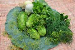 Ακόμα ζωή των λαχανικών. Στοκ Εικόνα