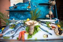 Ακόμα ζωή των φρέσκων ψαριών σε Rethymno στην Κρήτη Ελλάδα Θαλασσινά στον πάγο: octobus, σαλιγκάρια, καβούρια, γαρίδες, ψάρια κ.λ στοκ φωτογραφίες με δικαίωμα ελεύθερης χρήσης