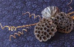 Ακόμα ζωή - ikebana των ξηρών lotuses και των σφαιρών καρύδων πλεκτό κλωστοϋφαντουργικό προϊόν μαντίλι ανασκόπησης κινηματογράφησ στοκ εικόνες με δικαίωμα ελεύθερης χρήσης