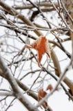 Ακόμα ζωηρόχρωμος το χειμώνα Στοκ εικόνες με δικαίωμα ελεύθερης χρήσης