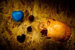 Ακόμα κρανίο αγάπης ζωής Στοκ εικόνες με δικαίωμα ελεύθερης χρήσης
