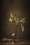 Ακόμα ξηρές τουλίπες λουλουδιών ζωής Στοκ φωτογραφίες με δικαίωμα ελεύθερης χρήσης